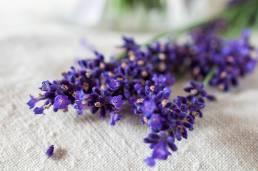 Fotografie kvetu levandule na webovú stránku